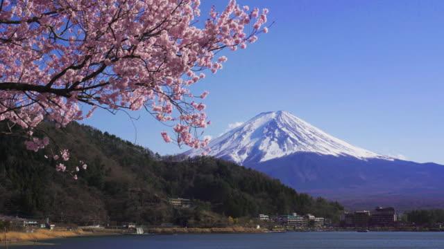 fuji berg und kirschblüten im frühling, japan. - pagode stock-videos und b-roll-filmmaterial