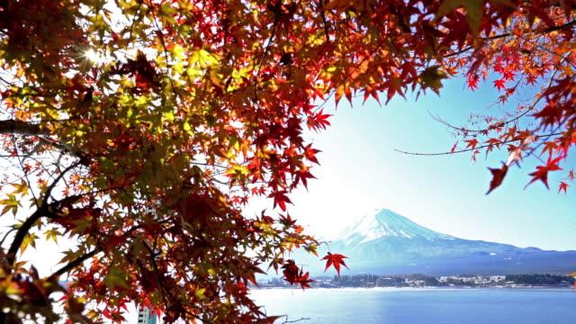 Fujisan in koyo autumn at kawaguchiko lake Yamanashi Japan video