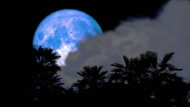 full blue moon back on night sky and blur cloud moving pass and silhouette ancient palm trees