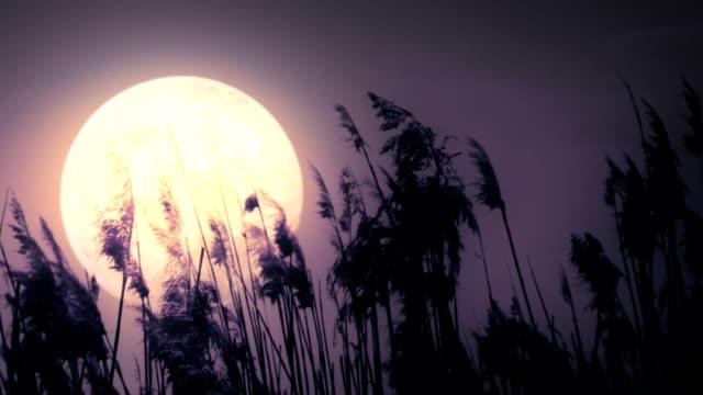 満月とリード - 湿地草点の映像素材/bロール