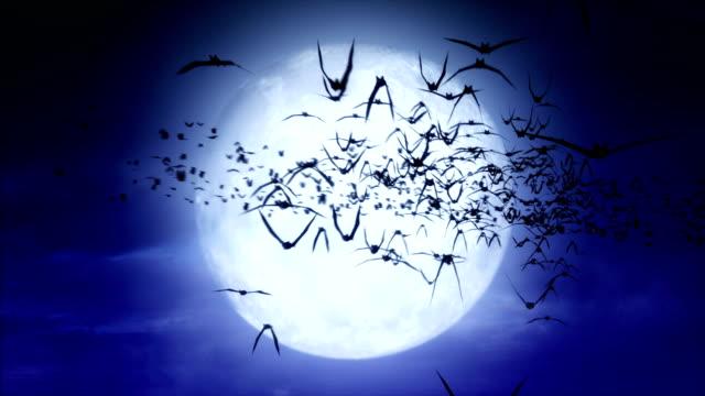 vollmond bats - halloween stock-videos und b-roll-filmmaterial