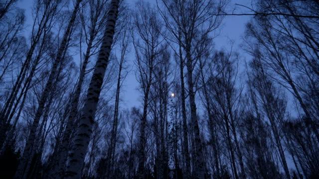 vídeos y material grabado en eventos de stock de luna llena en abedul en el crepúsculo - anochecer