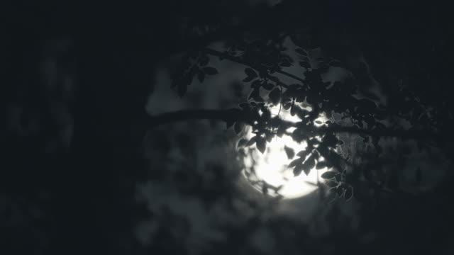 달이 나무를 통해 이동으로 보름달 밤 - 불길한 스톡 비디오 및 b-롤 화면