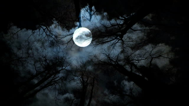full moon night. trees silhouette. spooky background