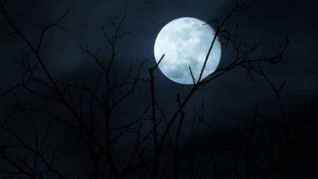 Photo of Full moon night