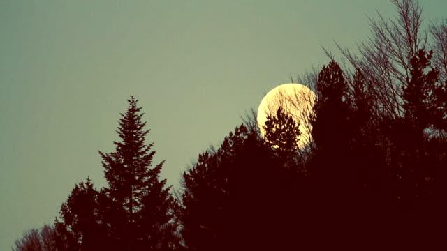 木の上の満月 ビデオ