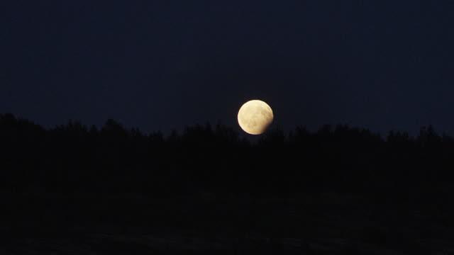 Full moon raising over trees. Time lapse