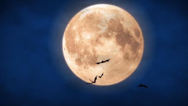 полная луна - halloween стоковые видео и кадры b-roll