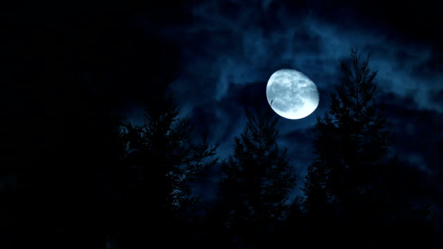 Full moon with pine tree