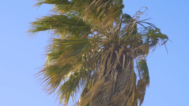 Full screen Palm in Wind