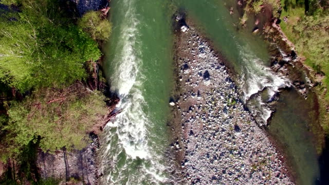 fullhd fhd aerial view. low flight over fresh cold mountain river at sunny summer morning - pianta sempreverde video stock e b–roll