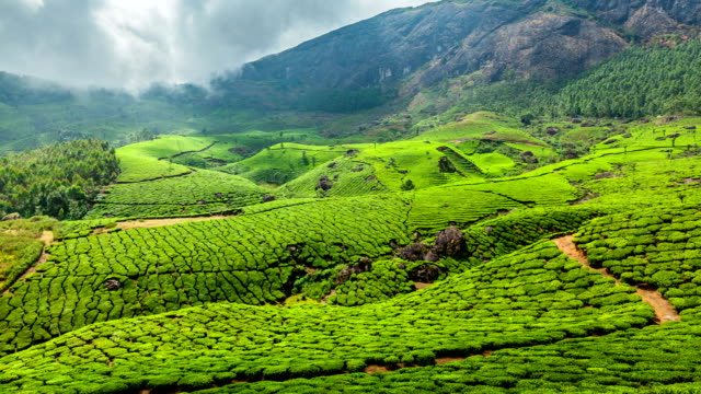FullHD Timelapse of green tea plantations in Munnar, Kerala, India video