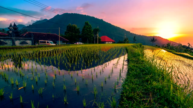 fullhd timelapse. sunset over the rice fields reflected in the water. 15 july 2015, bali, indonesia - bali filmów i materiałów b-roll