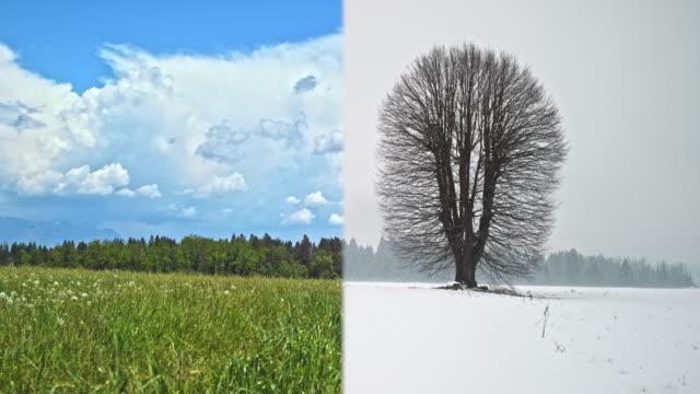 全環式: 四季草甸大樹 - four seasons 個影片檔及 b 捲影像
