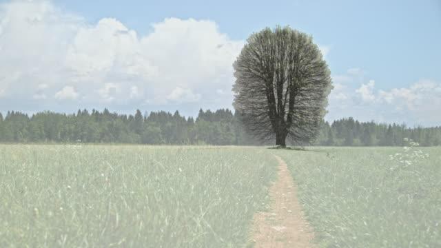 vídeos de stock, filmes e b-roll de plenamente capaz de laço: árvore alta no prado no inverno, primavera, verão, outono e inverno novamente - primavera estação do ano