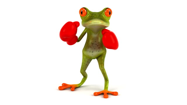 Fun frog boxing video