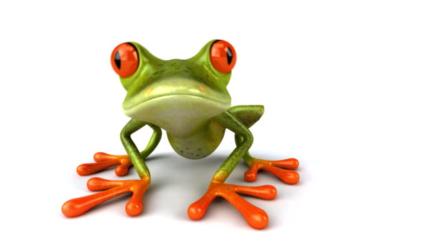 Fun frog  /file_thumbview_approve.php?size=1&id=21507720 amphibian stock videos & royalty-free footage