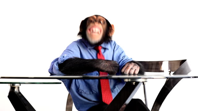 Fun Monkey video