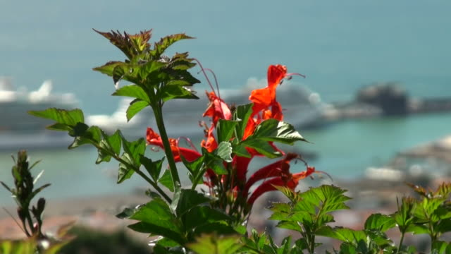 Funchal, the view: flowers,city,harbor  funchal stock videos & royalty-free footage