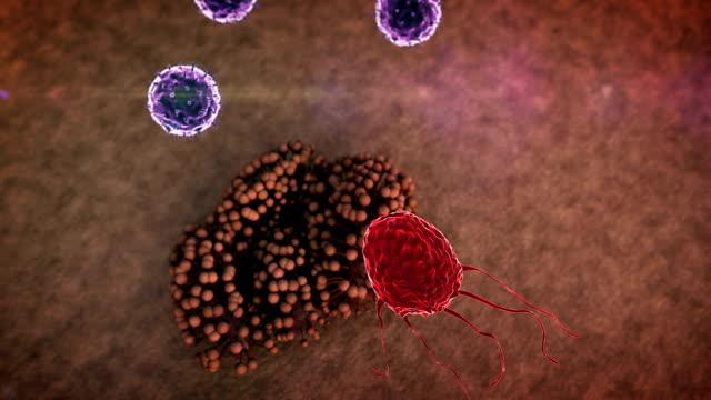 fungus and lymphocytes video