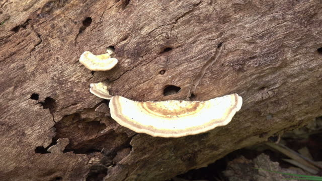 Fungus growth on tree stump