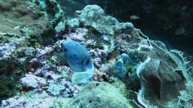 bize mercan evini gösteren komik kara lekeli bir kirpi. - i̇htiyoloji stok videoları ve detay görüntü çekimi