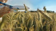 istock funny boy in a hat playing with airplane in wheat field, boy dreams of being a pilot 1284729213
