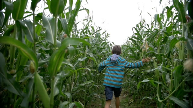 funny boy running on the corn field, back view video