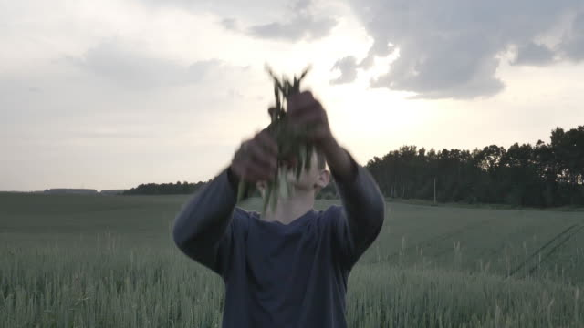 funny boy throws up wheat ears in the field in the evening