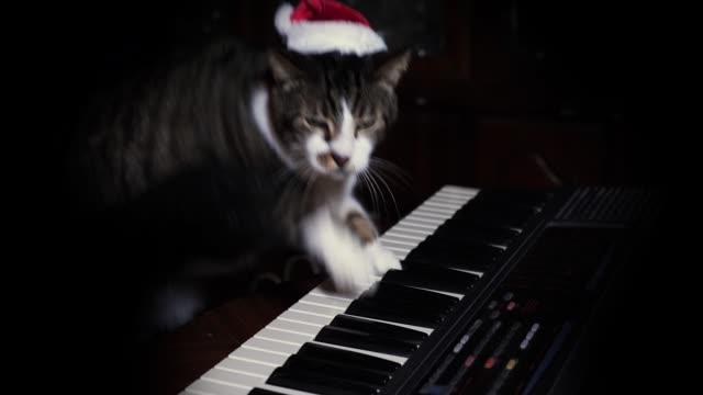 Funny Cat in Santa Hat Plays a Keyboard, Organ or Piano