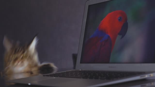 komik kedi maine coon. - meme hayvan vücudu bölümleri stok videoları ve detay görüntü çekimi