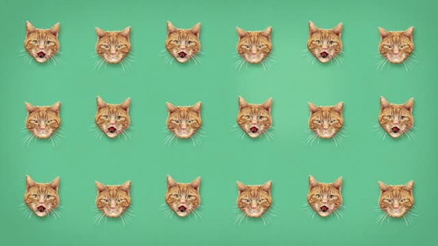 Funny Cat Miaow Grid Pattern for Background and Text Two options of layout size. One with space for writing copy or titles.  Roaring cat heads. Both looping. With alpha channel for you to layer up in your own project and change background and scale.  Works well in conjunction with our Cute Cat Roar animation. cartoon stock videos & royalty-free footage