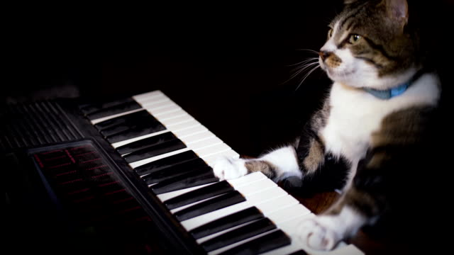 funny cat plays a keyboard, organ or piano - music filmów i materiałów b-roll