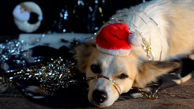 Funny dog on new year's Eve video