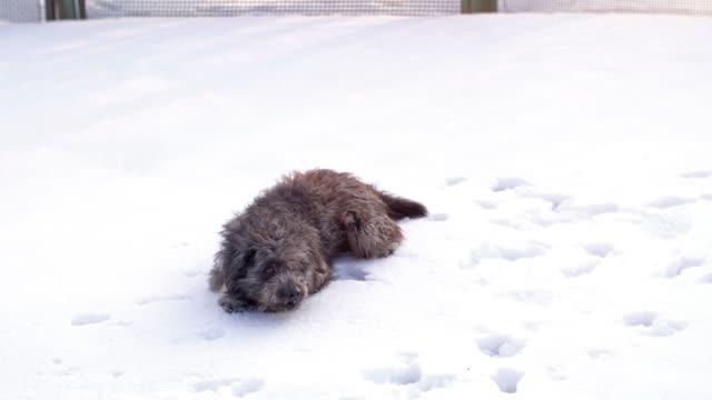 面白い犬プレイとジャンプ - 楽しい点の映像素材/bロール