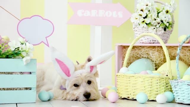 lustiger hund mit kaninchenohren. osterferien - osterhase stock-videos und b-roll-filmmaterial