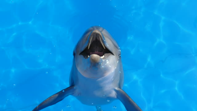 funny dolphin jumps out of water funny dolphin jumps out of water dolphin stock videos & royalty-free footage