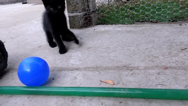 funny kitten playing with ball outdoors - kociak filmów i materiałów b-roll
