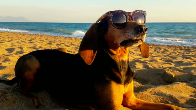 Funny portrait of a dog having a silly look wearing sunglasses against the sea.