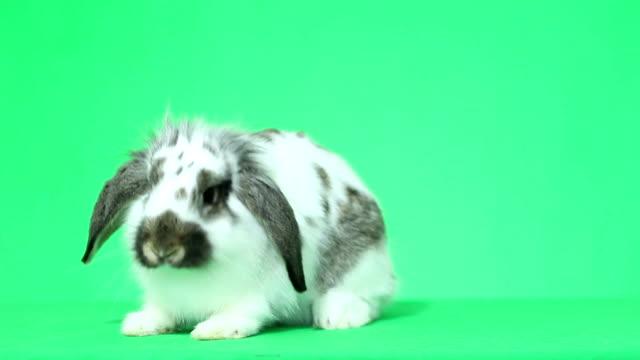 komik tavşan atlama - tavşan hayvan stok videoları ve detay görüntü çekimi