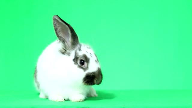 komik tavşan - tavşan hayvan stok videoları ve detay görüntü çekimi