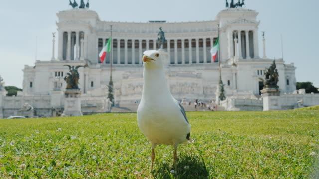 Funny Seagull on the background Monumento Nazionale a Vittorio Emanuele II at Piazza Venezia, Piazza Venezia. Tourism in Rome video