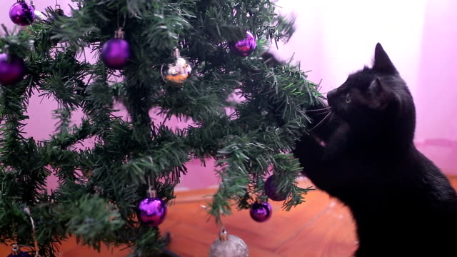 Funny small black cat playing with Christmas tree