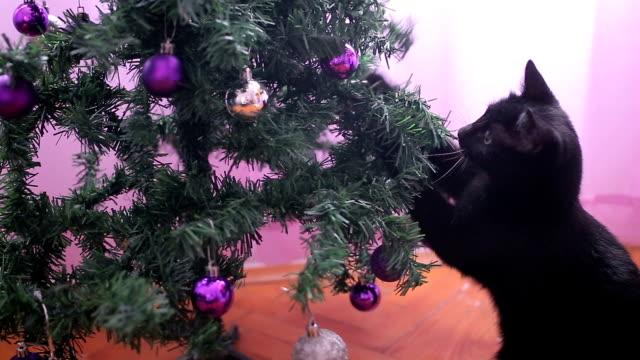 vídeos de stock, filmes e b-roll de gato preto pequeno engraçado que joga com árvore de natal - malícia