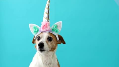 vidéos et rushes de petite licorne drôle petit crabot blanc sur le fond bleu - chapeau
