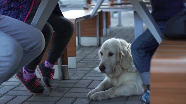rolig video - flicka utfodra sin hund under bordet i djurvänlig café med pommes frites - hunddjur bildbanksvideor och videomaterial från bakom kulisserna