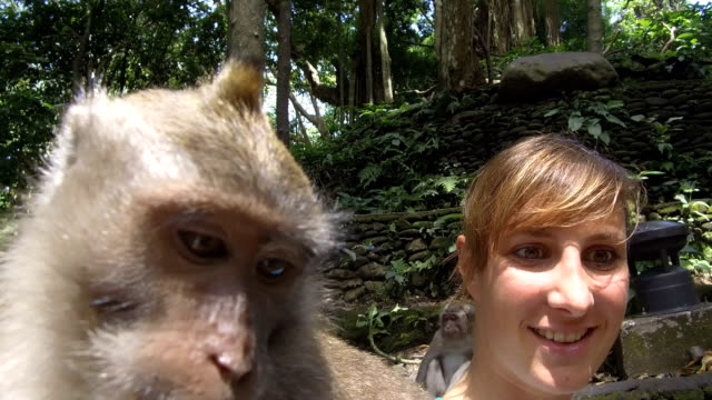 close up funny young tourist girl doing selfie with cute curious balinese monkey - scimmia antropomorfa video stock e b–roll