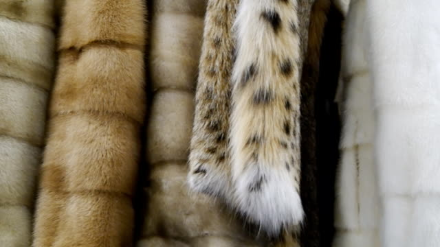 fur coat in the store Fine fur clothing on hangers in a store. Fur coat in the store rack stock videos & royalty-free footage