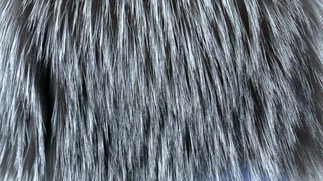 vídeos y material grabado en eventos de stock de piel - peludo