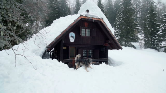 ein pelziges großer hund vor einer berghütte im schnee - blockhütte stock-videos und b-roll-filmmaterial